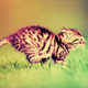 Kittynater